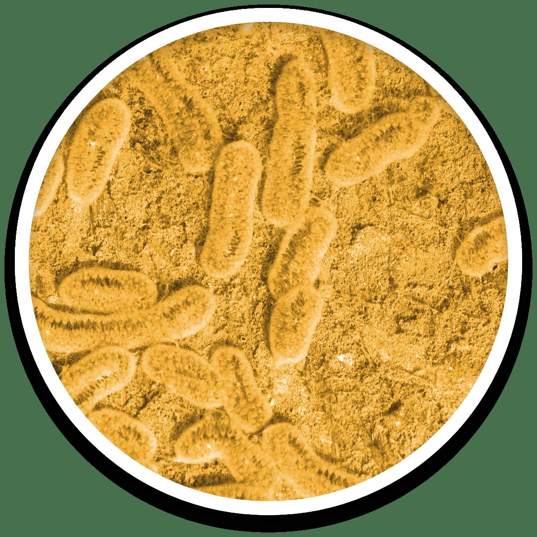 strain-circle